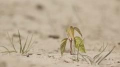 drought desert landscape plant - stock footage