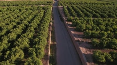 Aerial view of orange tree field with road - stock footage