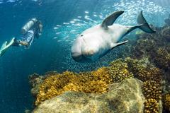 dolphin underwater on ocean background looking at you - stock photo