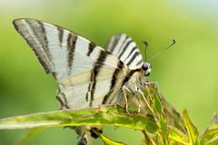 Open wings butterfly portrait - stock photo