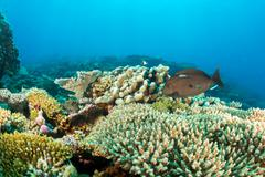Maldives corals house for Fishes underwater landscape Stock Photos
