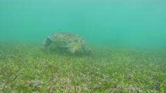 A underwater shot of cool sea turtle in tropical blue ocean water Stock Footage