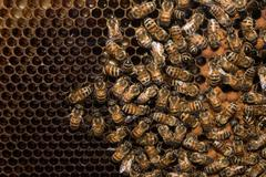 Bees inside beehive while making honey detail Stock Photos