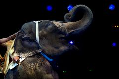 Circus elephant on black background Stock Photos