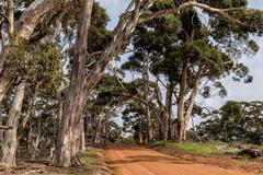 Australia red road in green eucalyptus forest Stock Photos