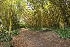 Inside a giant bamboo forest Stock Photos