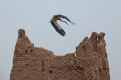 a stork on Ait Ben Haddou - stock photo