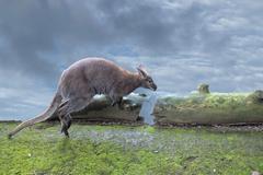 Kangaroo while jumping close up portrait Stock Photos