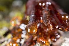 tree natural resin close up macro - stock photo