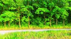 Camera flight over rural landscape. Stock Footage