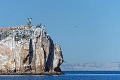 baja california beach crystal water white tropical paradise panorama - stock photo