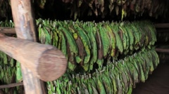 Cuban Tobacco leaves drying Stock Footage