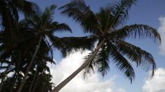 Empty Beach in Beautiful Paradise Carribean Bahamas Setting Arkistovideo