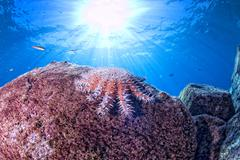 Sea stars in a reef colorful underwater landscape background Stock Photos