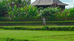 Laborer Walking across Traditional Balinese Rice Farm. Video FullHD - stock footage