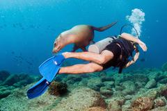 Diver approaching sea lion family underwater  to have fun and play - stock photo