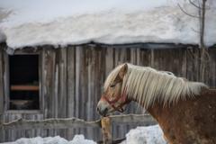Horse portrait on the white snow background - stock photo