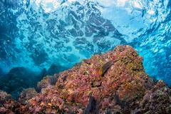 underwater waves on the reef background - stock photo