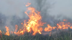 Fire burning dry grass on forest meadow, field, wildfire spreading Stock Footage