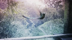Hummingbird flying away from feeder Stock Footage
