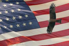 Eagle on star and stripes flag background Stock Photos