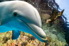 dolphin and sea lion underwater on ocean background looking at you - stock photo