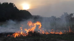 Fire and thick smoke in woods, wildfire, burning dry grass against evening sun - stock footage