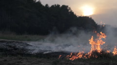 Forest fire, wildfire, burning dry grass, flame, thick smoke, dramatic landscape Stock Footage