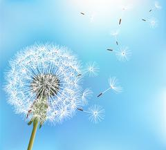 Flower dandelion on blue background Stock Illustration
