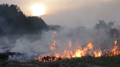 Fire in woods, burning dry grass, flame, thick smoke, dramatic landscape Stock Footage