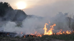 Fire in woods, wildfire, burning dry grass, thick smoke, against sunset Stock Footage