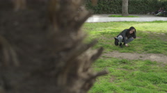 Young woman vomiting spied from behind a tree Stock Footage