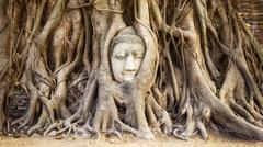Buddha Head in the Tree Trunk at Wat Mahathat Temple, Ayutthaya, Thailand - stock photo
