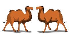 Bactrian Camel Isolated on White Background - stock illustration