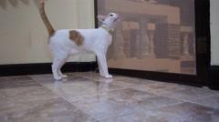 Cat looks at something through mosquito net door Stock Footage