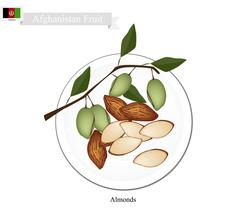 Almonds, One of The Most Popular Fruit inAfghanistan - stock illustration