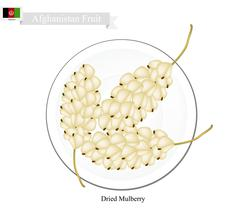 Dried Mulberry, A Popular Fruit in Afghanistan Stock Illustration