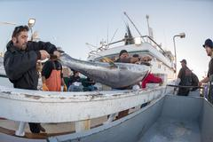 SAN DIEGO, USA - NOVEMBER 17, 2015 - fishing boat unloading yellowfin tuna at - stock photo