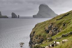 Sheep ram in far faer oer island landscape Stock Photos