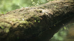 Dragonfly resting on the tree trunk in freshwater of a lake Stock Footage