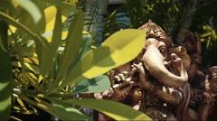 Big statue of hindu deity Ganesha between trees, Bali Stock Footage