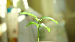 Man hands covering house-like small green sprout video. Environmentalism concept Stock Footage