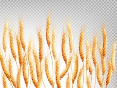 Wheat isolated on a transparent background. EPS 10 Piirros