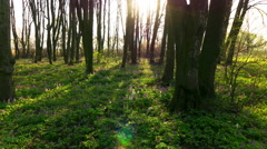 Movement of shadows in spring wood. 4K Time lapse, RAW output. Stock Footage