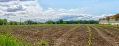land cultivated with plantations - stock photo