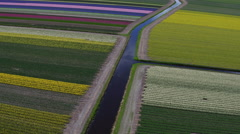 Tulips field in north Holland Stock Footage