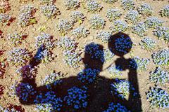 Photographer's shadow and Forget-me-not flowers in the park - stock photo