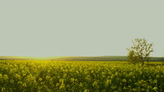 Sunset time lapse over rape field in countryside, HDR RAW shots Stock Footage
