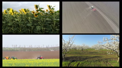 Agricultural theme, Cherry tree garden, sunflowers field, Tractor spraying Stock Footage
