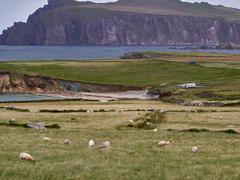 Sheeps at the Irish West coast - stock photo